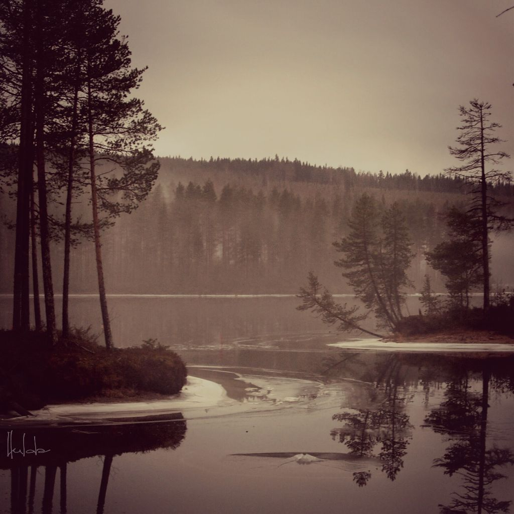 Sweden nature photography