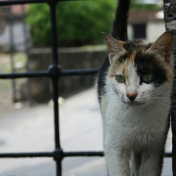 cat kedi hayvan animal diyarbakır