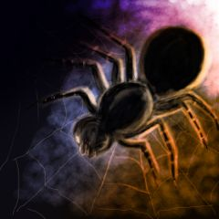 dcspiderweb