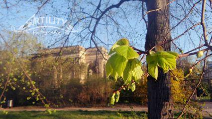 spring tree green leaf