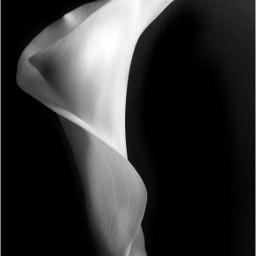 photography blackandwhite flower