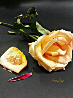 rose flower love photography emotions
