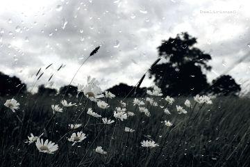 deeliriouss photography nature emotions mood