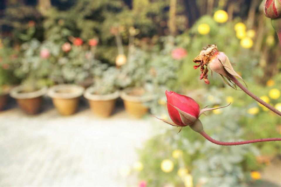 My rooftop #garden#myview