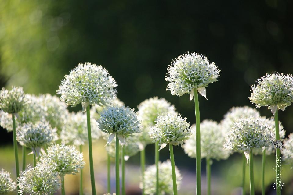 Promenade in the garden #dailytag  #garden  #flower