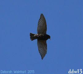 bird flight flying nature action