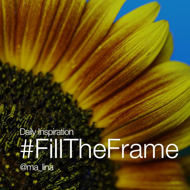 Friday Inspiration #FillTheFrame