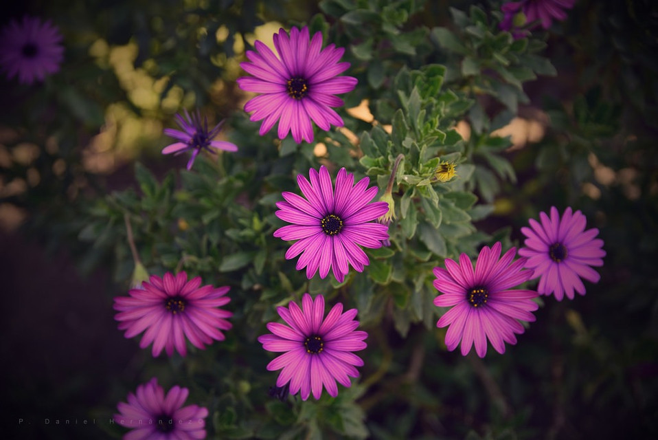 #nature  #naturaleza  #flower  #flowers  #flor  #flores  #floral  #beautiful  #beauty  #photography  #nikon  #nikond750