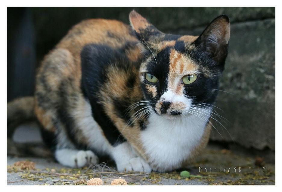 #cat  #mypet #cute #animal #ilovecat