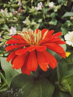 beautiful flower nature cute colors