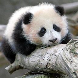 my_animal_favority osopanda