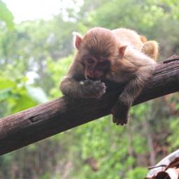 monkey travelthailand