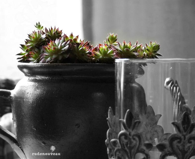 On my diningtable...🌿   #colorsplash #freetoedit #flower #photography