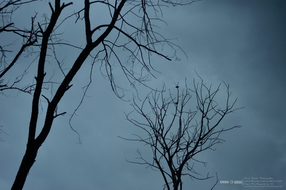 emptiness !!  #photography  #nature #tree #silhouette  #silhouette photography