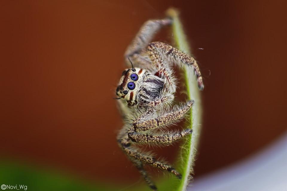 Get closer  #freetoedit #nature #petsandanimals #photography  #macro #macrophotography #closeup #spider #arachnid