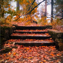 autumn staircase leaves nature photography