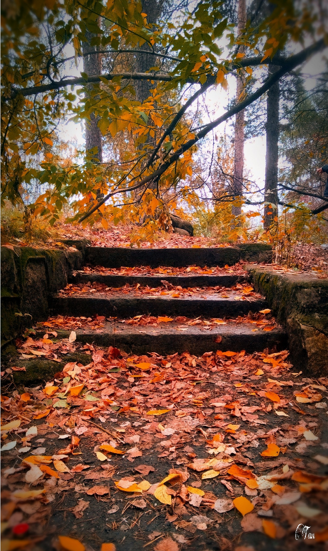 #autumn #staircase #leaves #nature #photography